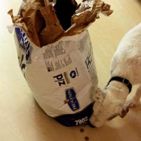 dogfood-a5