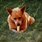 dogfoodinfo-025