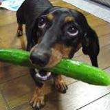 dogfood-b9