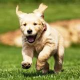 dogfoodinfo-027