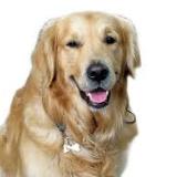 dogfoodinfo-030