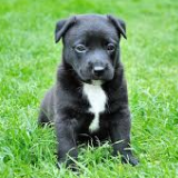 dogfoodinfo-033