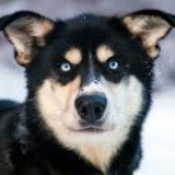 dogfoodinfo-034