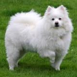 dogfoodinfo-036