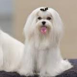 dogfoodinfo-38