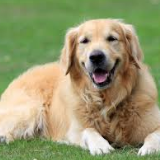 dogfoodinfo-39