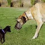 dogfood-info